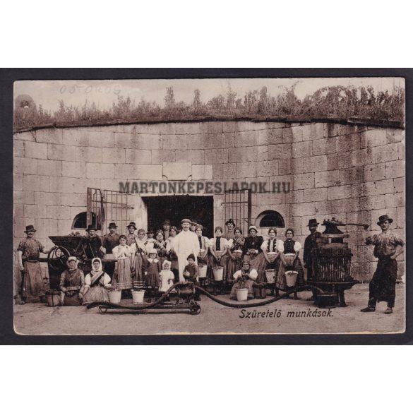 Ostoros régi képeslapon. Szüretelő munkások